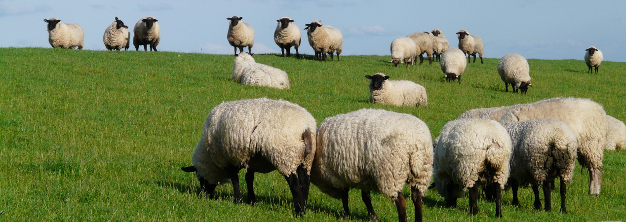 Did you know you must apply for Temporary Land Association to your own holding if you take on grass keep?